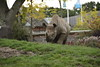 Chester Zoo (801) (rs1979) Tags: chesterzoo zoo chester blackrhino rhino