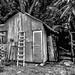 bush hut