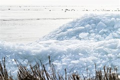 Shifting Ice. (parnas) Tags: ijs ijsselmeer kruiendijs laaksum friesland nederland winter vogels
