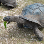 Giant tortoise Seychelles islands thumbnail