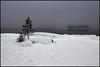 (Jonas Thomén) Tags: dimma fog night natt träd tree trees snow snö ice is sea hav havet vatten water island ö longexposure långexponering rocks stenar 6min
