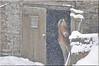 ...bad weather... (friedrichfrank1966) Tags: horses winter snow schneetreiben pferde flocke