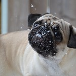 Silly Boo Lefou Trying To Catch Snowflakes thumbnail