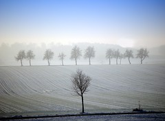 Trees and snow (Tobi_2008) Tags: bäume trees arbres schnee snow himmel sky landschaft landscape sachsen saxony deutschland germany allemagne germania supershot
