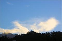 IMG_5816 (RUIJOAO30) Tags: snow neve pico ruivo bird milhafre landscape nuvens clouds madeira island