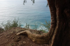 Nā Pali Coast (Sean Munson) Tags: kauai hawaii ocean water pacificocean nāpalicoast tree hiking kalalautrail