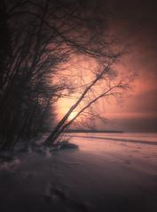 Cold winter sun (petrisalonen) Tags: winter sun sunset landscape finland nature red trees canon6d canon1635f4lisusm outside sunlight light outdoor sky