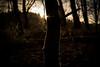 Rim Light (jkiter) Tags: rimlight moos deutschland baum landschaft sonnenstern gegenlicht haard wald natur pflanze germany landscape nature outdoor backlight forest frontlighting plant
