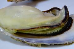 DSC00053 (muzina_shanghai) Tags: 牡蠣 蒸し牡蠣 oyster