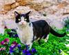 Split, Croatia (Kevin R Thornton) Tags: d90 2017 travel animalportrait cat split croatia europe mediterranean animal splitskodalmatinskažupanija hr