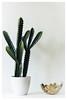 Home interior (gerritdevinck) Tags: decoration home interior interieurfotografie interieur interiorphotography deco