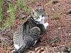 Viviendo en  la naturaleza. (adioslunitaadios) Tags: gato gatocomún mamífero canon campo airelibre felino mascota