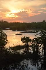 Park Ranger: Everglades National Park (claire dal nogare) Tags: nps nationalpark nationalparksystem nationalparkservice ever everglades evergladesnationalpark park parkranger interp visitorcenter gulfcoast gulfcoastvisitorcenter evergladescity southflorida saltlife swamplife swamp travel adventure explore outdoors getouside ocean gulfofmexico