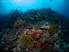 21022018-_1240137 (chevalbenjamin) Tags: philippines visayas bohol underwaterphotography underwater scubadiving dive plongéesousmarine plongée reef recif seaocean nature