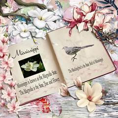 M2 (AlasandraATCAD) Tags: bbchall06 magnolias mississippi state trees flowers