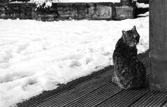 Waiting (Rachelnazou) Tags: caffenol blackwhite minolta film ilford analog argentique