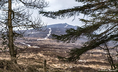 Beyond the Trees (manxmaid2000) Tags: hill mountain snow tree path landscape contrast isleofman rural trees forest plantation countryside heather gorse winter cold chill ice barren bare southbarrule manx iom sky land weather trail fence desolate