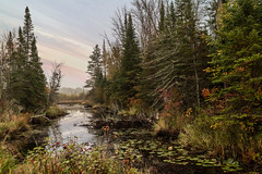 Scenic Still River Sunset Scene (Patti Deters) Tags: scenic river sky sunset water trees lilypads pinetrees pine reflection sunrise wilderness outdoors nature reeds plants bog boggy creek stream