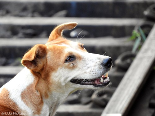 Flickriver: Doge pool