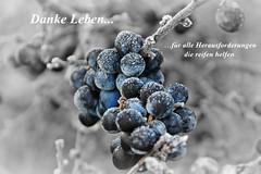 (Uli He - Fotofee) Tags: ulrike ulrikehe uli ulihe ulrikehergert hergert nikon schlehe schlehendorn beeren blau winter reif rauhreif reifen herausforderung leben danke