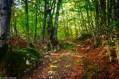 Tra i boschi (SDB79) Tags: bosco foresta sentiero escursione trekking natura