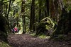 low angle view of out of focus walkers on the path in lush fern forest (hueymilunz) Tags: landscape nature nz newzealandtransition newzealand green tree forest dark path hawkesbay pink people outdoor