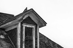 Pigeon Camera (Mister Day) Tags: pigeon house contrasts bnw bw blackandwhite noir urban decay architecture wood rot angles detail minimal