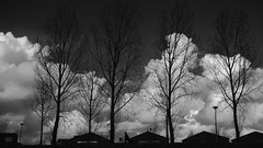 Dutch (STEHOUWER AND RECIO) Tags: dutch hollands bicycle bicycling girl woman lady meisje vrouw dame dike dijk clouds wolken big bigclouds weather badweather silhouettes silhouetten bw blackandwhite zwartwit netherlands holland nederland barendrecht trees houses bomen huizen sony dscrx100