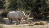 Rhinocéros ( réserve africaine de Sigean dans l'Aude) (Didier Gozzo) Tags: aude sigean afrique réserve rhinocéros