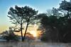 winterse zonsopgang (Don Pedro de Carrion de los Condes !) Tags: donpedro d700 nijkerk heide buitengebied winters vorst zon zonsopkomst sfeer vroeg koud bomen struiken doorkijkje landschap wintry kruishaar
