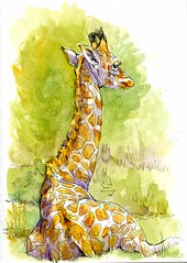 Baby Giraffe-Zensations Zebra Pen & Watercolor on Hahnemühle Cezanne 140 HP (molossus, who says Life Imitates Doodles) Tags: postcardsforthelunchbag watercolor giraffe animal wildlife