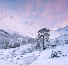 Nevis (Scott Robertson (Roksoff)) Tags: glennevis mist trees bennevis rivernevis scotspine steallgorge fortwilliam lochaber scottishhighlands scotland winter ice snow hail wind cold lonetree tree nikond810 1635mmf4 leefilters pine log