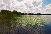 Time to Go Fishing (npbiffar) Tags: water lake grass sky blue tree lillypad landscape waterscape npbiffar 1685mm d5300 nikon wideangle serene peaceful marsh florida clouds