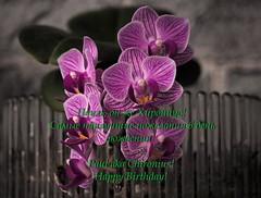 Happy Bday! С днём рождения! (vorotnik1) Tags: happy bday wishes orchids