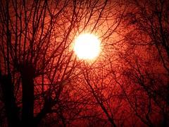 2018-02-22 sunset (8)f (april-mo) Tags: sunset coucherdesoleil nord france villerscampeau trees baretrees orange branches
