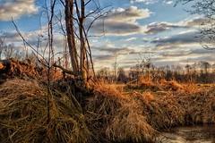 Spreewald im Winter (my-pixx) Tags: spreewald natur winter wald ufer sonnenuntergang sonne