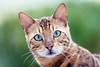 Diego (Garen M.) Tags: cat diego nikond800 nikkor70200mmf28