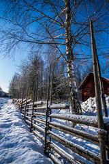 Winterfence (Mange J) Tags: k3ii alongtheroad clear fence forrest fotosöndag nature shadow snow staket winter wood wooden värmlandslän sverige se sigma1020mmf456exdc sigma pentax blue shadows värmland sweden landscape