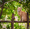An innocent cat at Jungle Cafe in Margalla Hills, Islambad, Pakistan (▓▒░Farrukh░▒▓) Tags: islamabad federalcapital pakistan