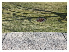 Rasenreibe / Lawn Grater (bartholmy) Tags: hartford ct rasen lawn gully gullydeckel manholecover drain baum tree schatten shadow sims ledge minimal minimalism minimalismus minimalistisch abstrakt abstract