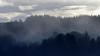 Gentle Misting (PJ Swan) Tags: mist dunkeld trees woodland forest scotland perthshire uk winter misty
