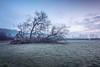 Fallen Angel (Sarah_Brooks) Tags: fallen tree storm stormelenor landscape frost mist treescape frosty misty somerset