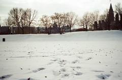 (bearfoxwolfdeer) Tags: 35mm canonsureshotzoomxl pointandshoot automatic expired film kodakgold kodakgold200 streetphotography parliment winter snow