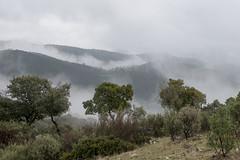 Sierra de Andujar - Andalusia - Spain (wietsej) Tags: sierra de andujar andalusia spain rx10 rx10m4 iv landscape mist fog rx10iv
