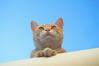 En Busca de Una Bruja (Tomás Hornos) Tags: cat gato animal mascota pet contrapicado