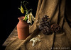 Time Goes By (James Neeley) Tags: stilllife jamesneeley