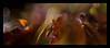 agitation (pete ware) Tags: sporophyte macro photoshop peteware extensiontubes nikond7000 afnikkor50mmf18d composite plantingpot moss