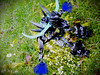 Demon Beast #2 (NAYROD MOCs) Tags: moc bionicle lego demon herofactory
