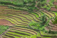 _U1H6187.0617 La Pán Tẩn,Mù Cang Chải,Yên Bái (HUONGBEO PHOTO) Tags: mùađổnước yênbái mùcangchải lapántẩn northvietnam green vietnamlandscape countryside view sowingseason terraces landscape highland outdoor