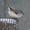 Titmouse in the snow. (fjsLFR) Tags: titmouse food